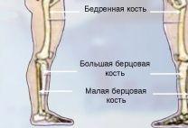 Берцовая кость: местонахождение, функции, симптомы ее переломов и их лечение