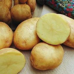 картошку можно и есть, и лечиться ею