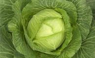 при бурсите помогает компресс из капустного листа