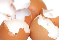 яичная скорлупа помогает не только при остеопорозе