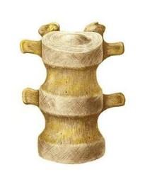 ГС и ХС восстанавливают костную и хрящевую ткань