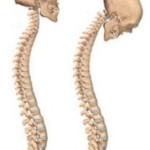Болезнь Бехтерева: симптомы, признаки и лечение болезни анкилозирующий спондилит
