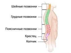 Почему болит спина в области поясницы?