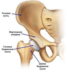 Костные структуры сустава