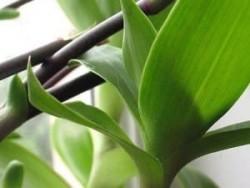 Полезное растение