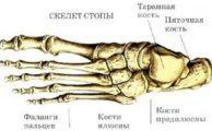 Кости стопы человека: строение и профилактика их заболеваний