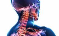 Шейный отдел позвоночника: особенности анатомии, типичные травмы шеи и профилактика заболеваний