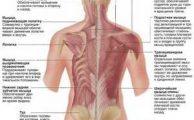 Мышцы спины человека: расположение и функции, что вызывает появление в них боли