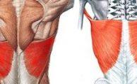 Широчайшая мышца спины: функции, каким заболеваниям подвержена, как накачать